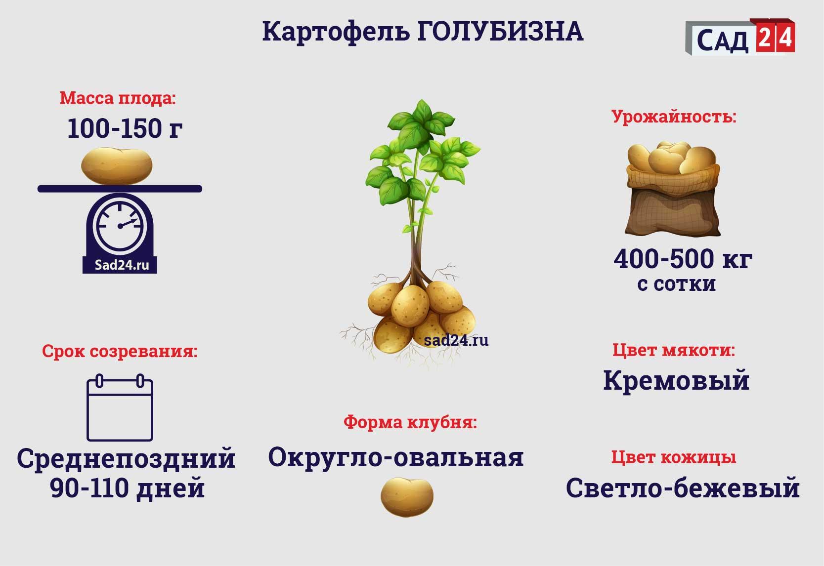 Голубизна - https://sad24.ru