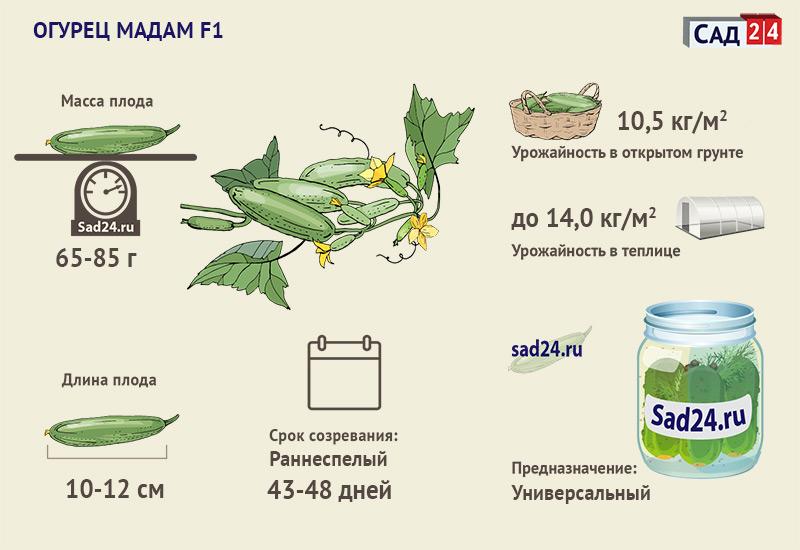 Мадам - https://sad24.ru