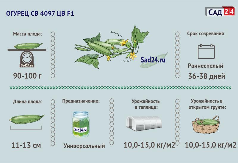 СВ 4097 ЦВ -https://sad24.ru