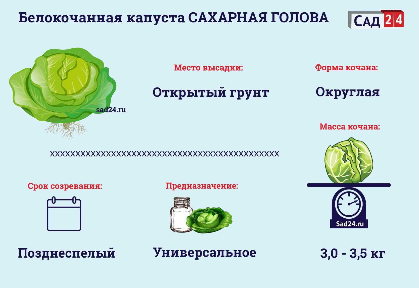 Сахарная голова - https://sad24.ru