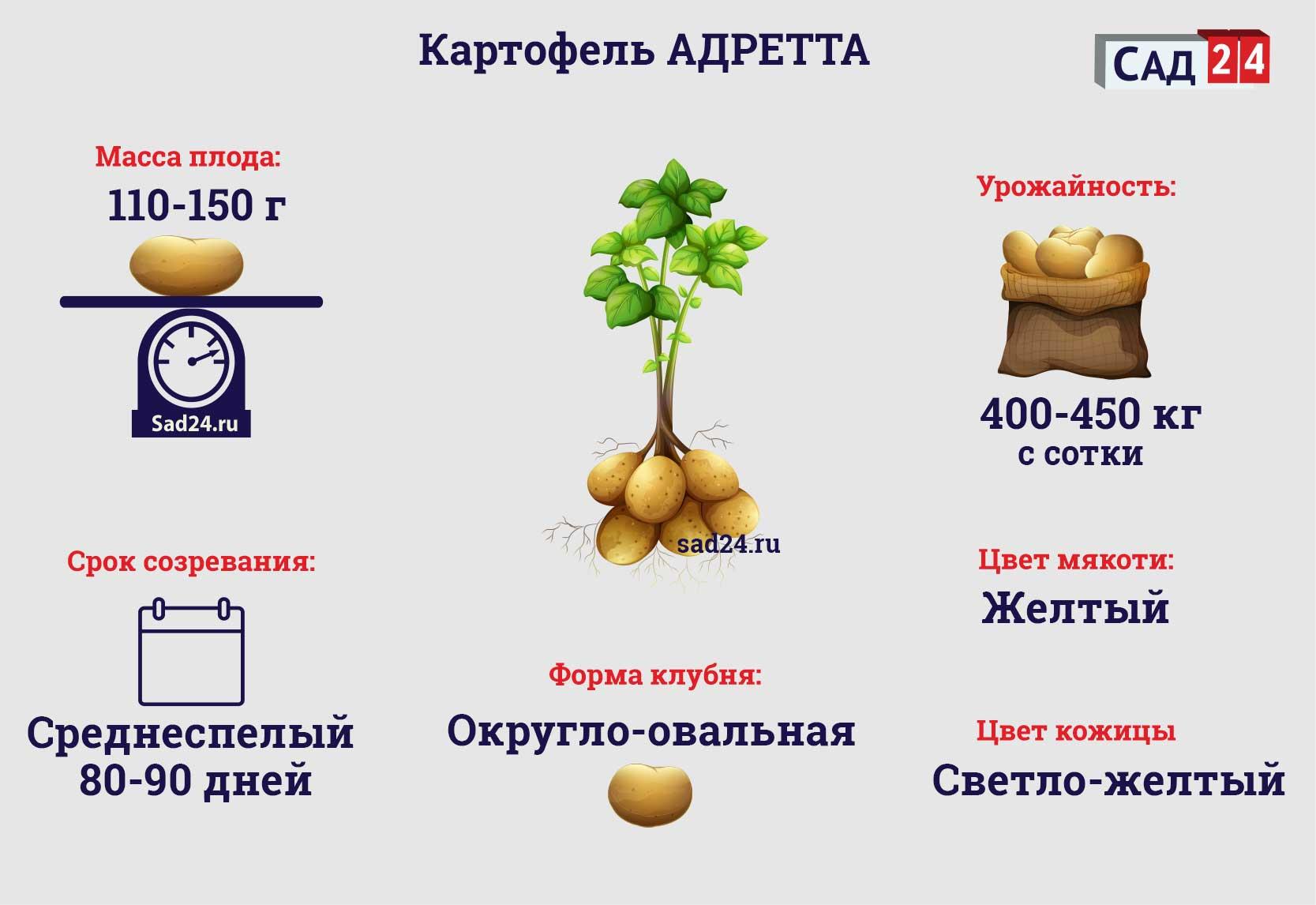 Адретта - https://sad24.ru