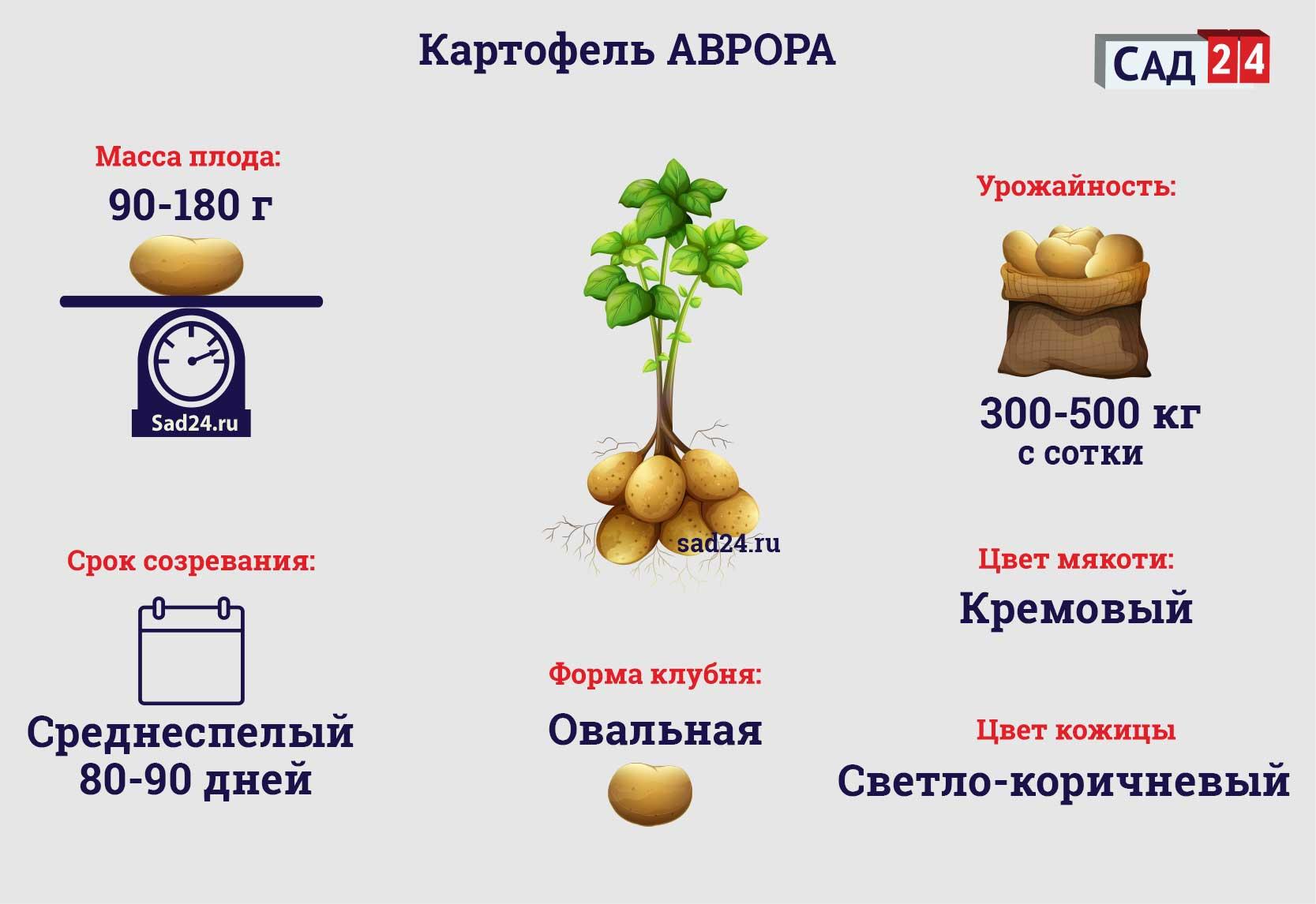 Аврора - https://sad24.ru/