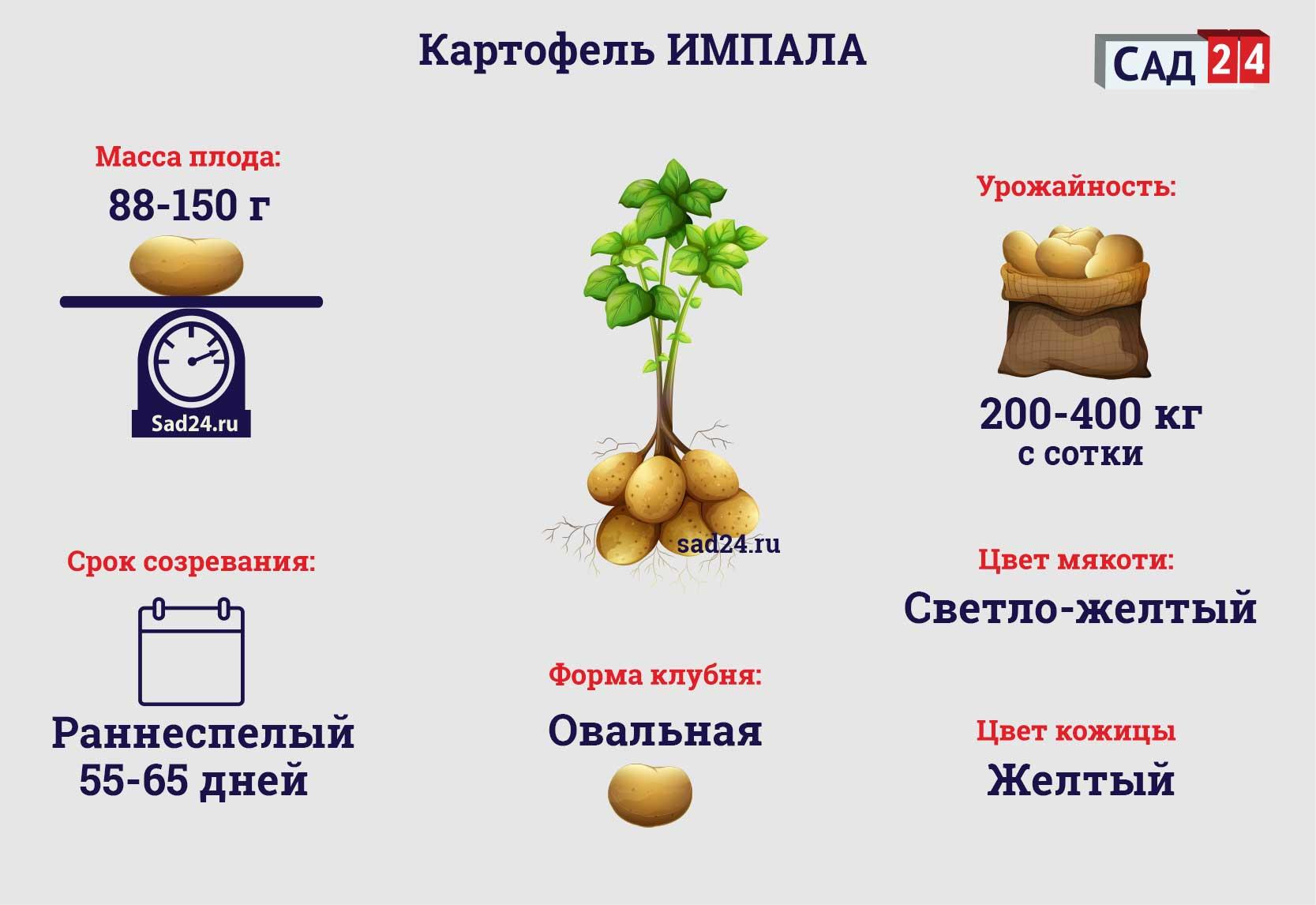 Импала - https://sad24.ru