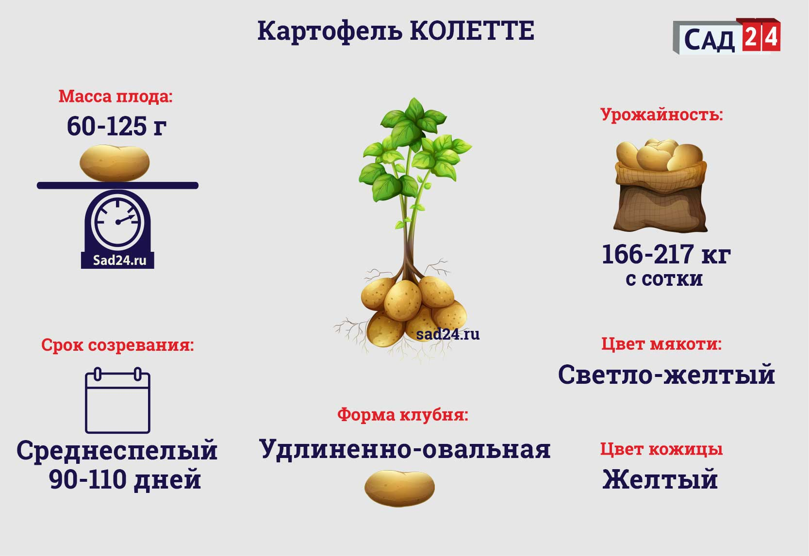 Колетте - https://sad24.ru