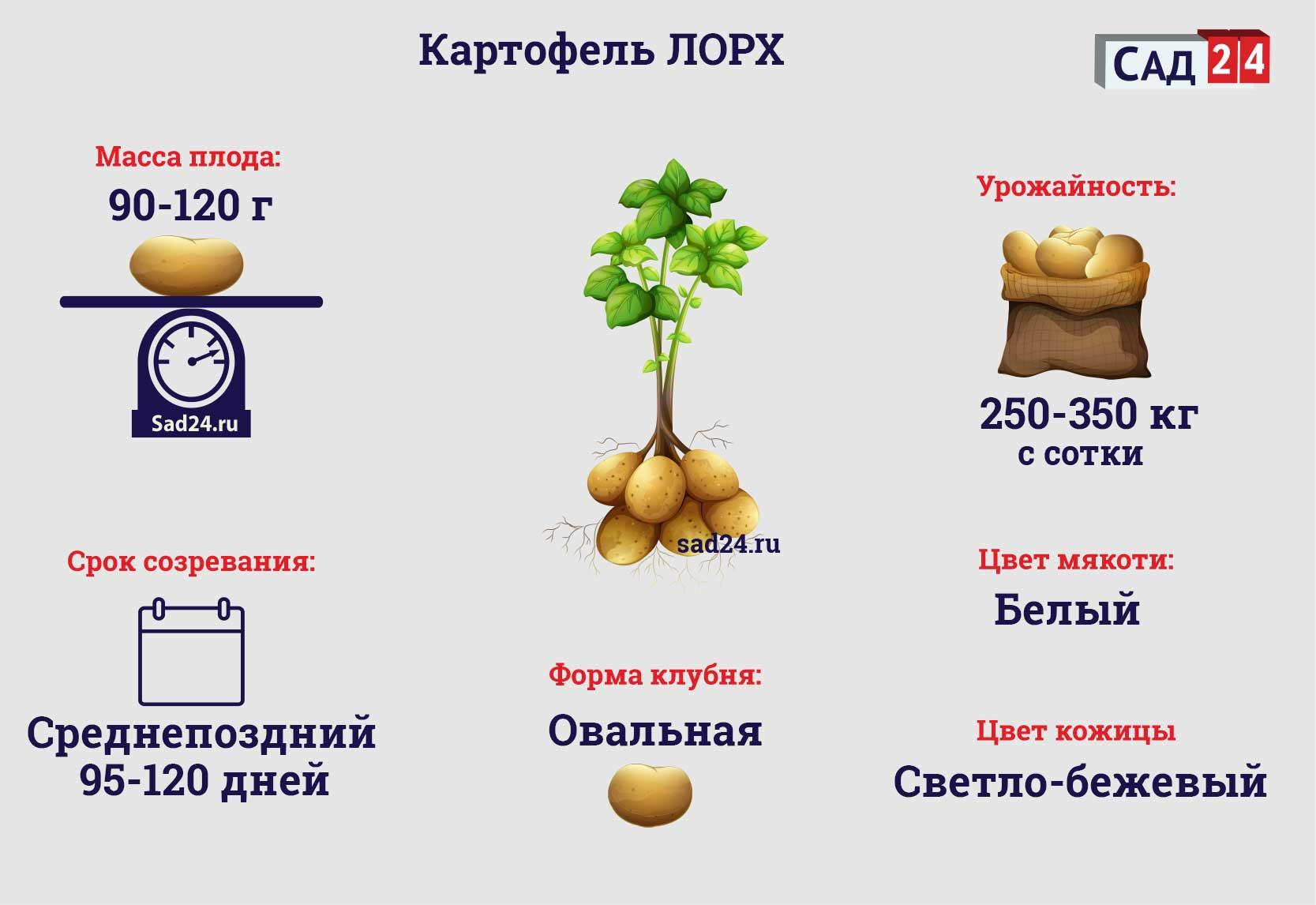 Лорх - https://sad24.ru