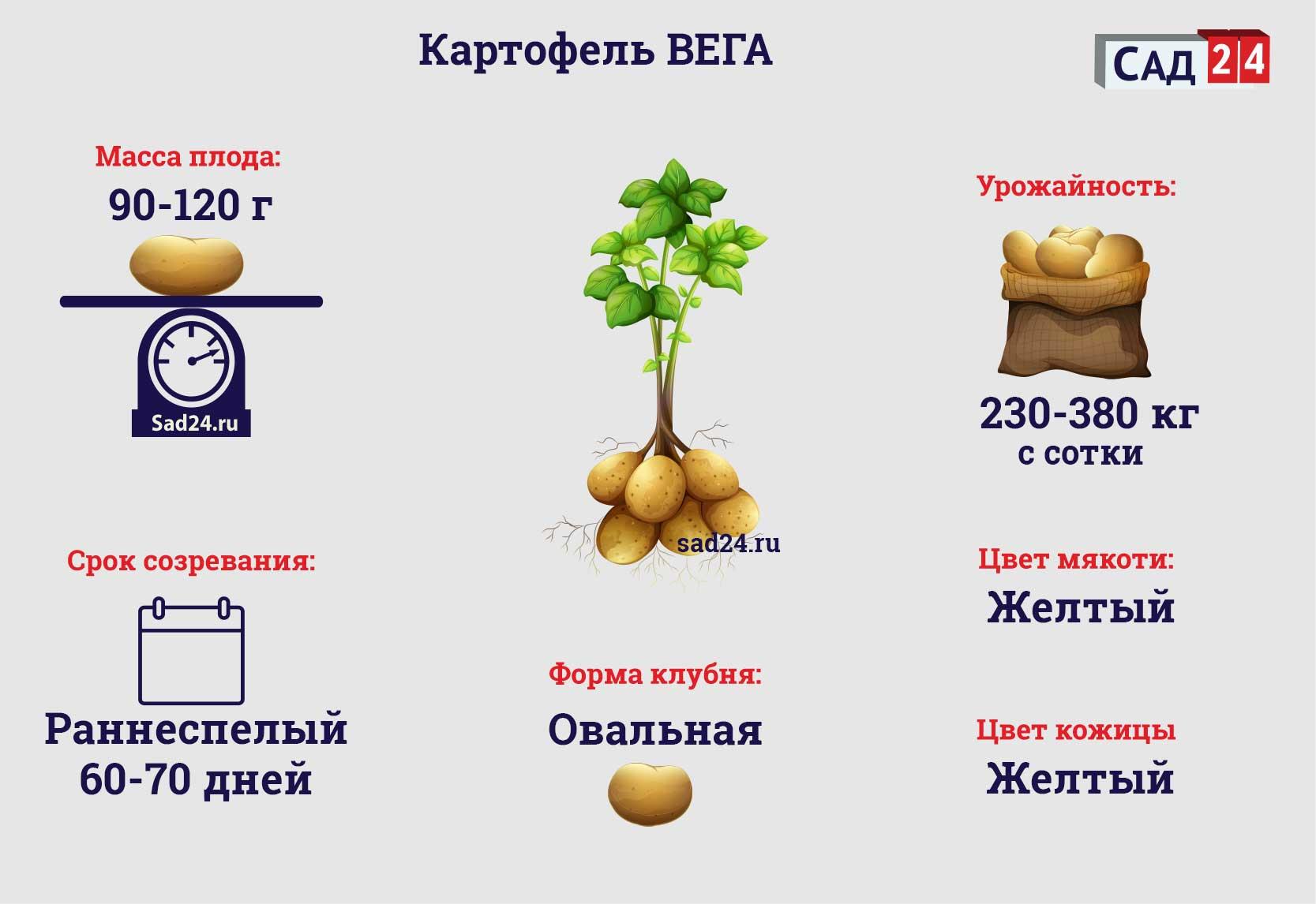 Вега - https://sad24.ru
