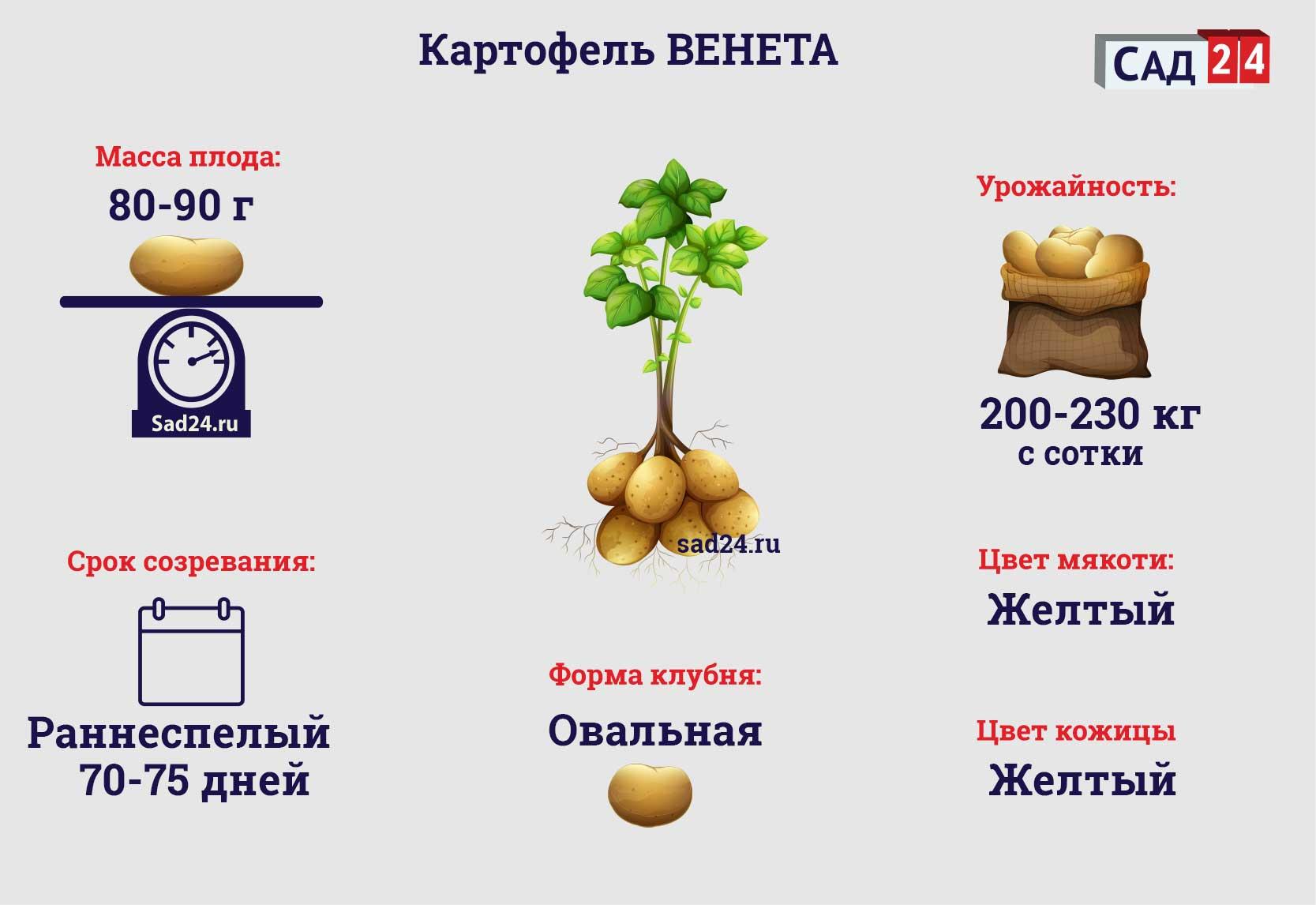 Венета - https://sad24.ru