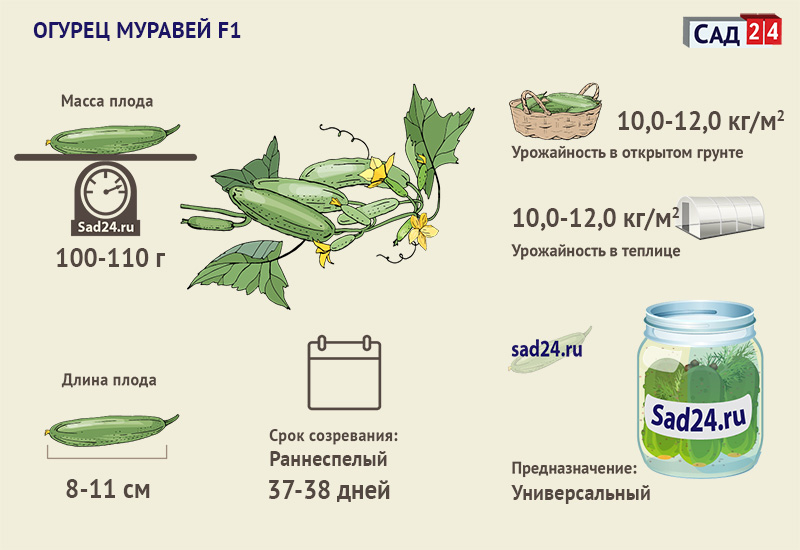 Муравей F1 -https://sad24.ru