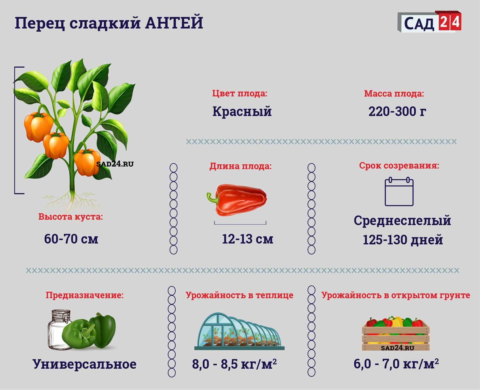 Антей - https://sad24.ru