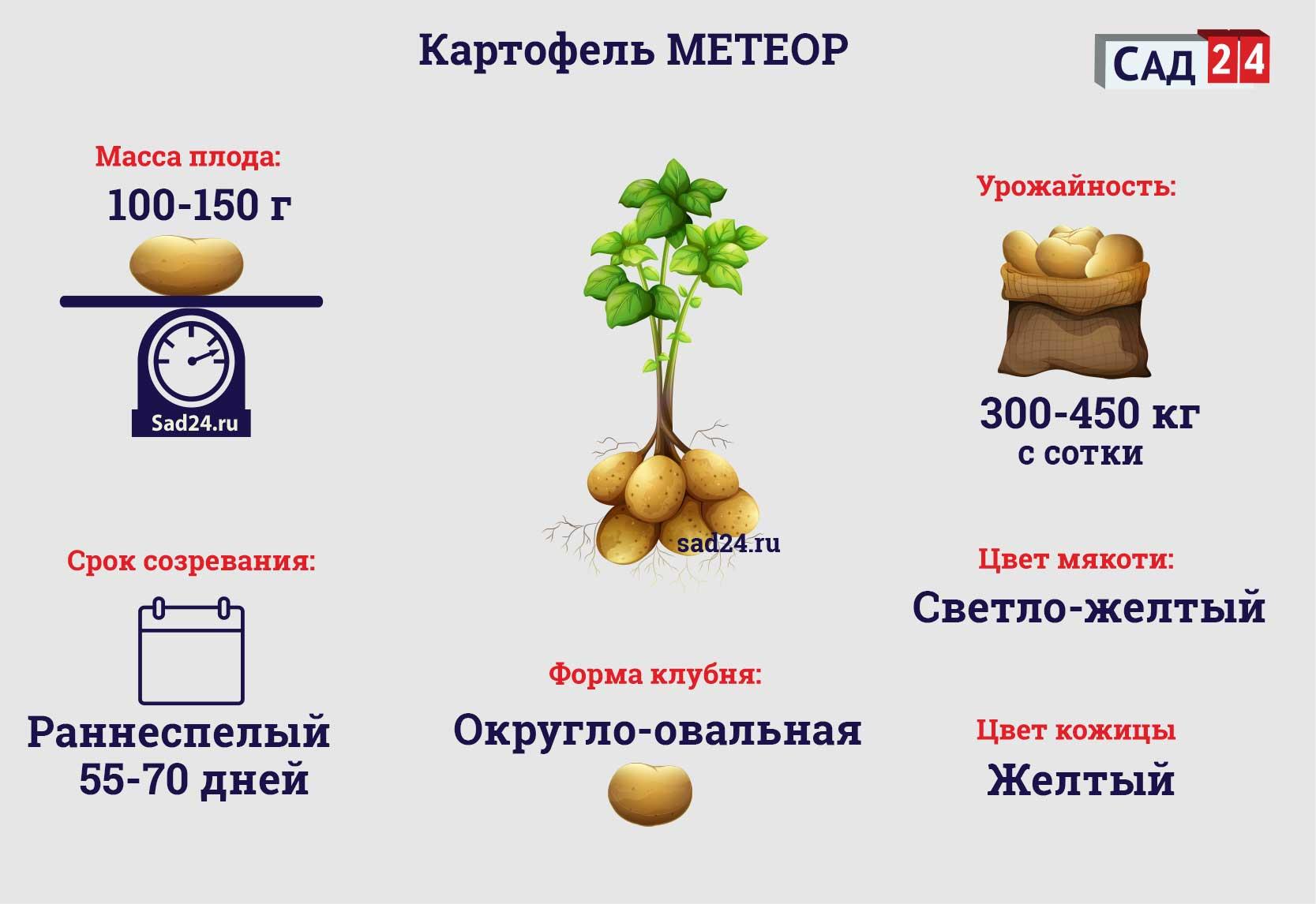 Метеор - https://sad24.ru