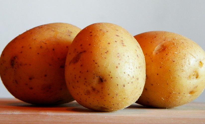 Скороспелый картофель Метеор. Характеристика сорта, агротехника и отзывы - Дача