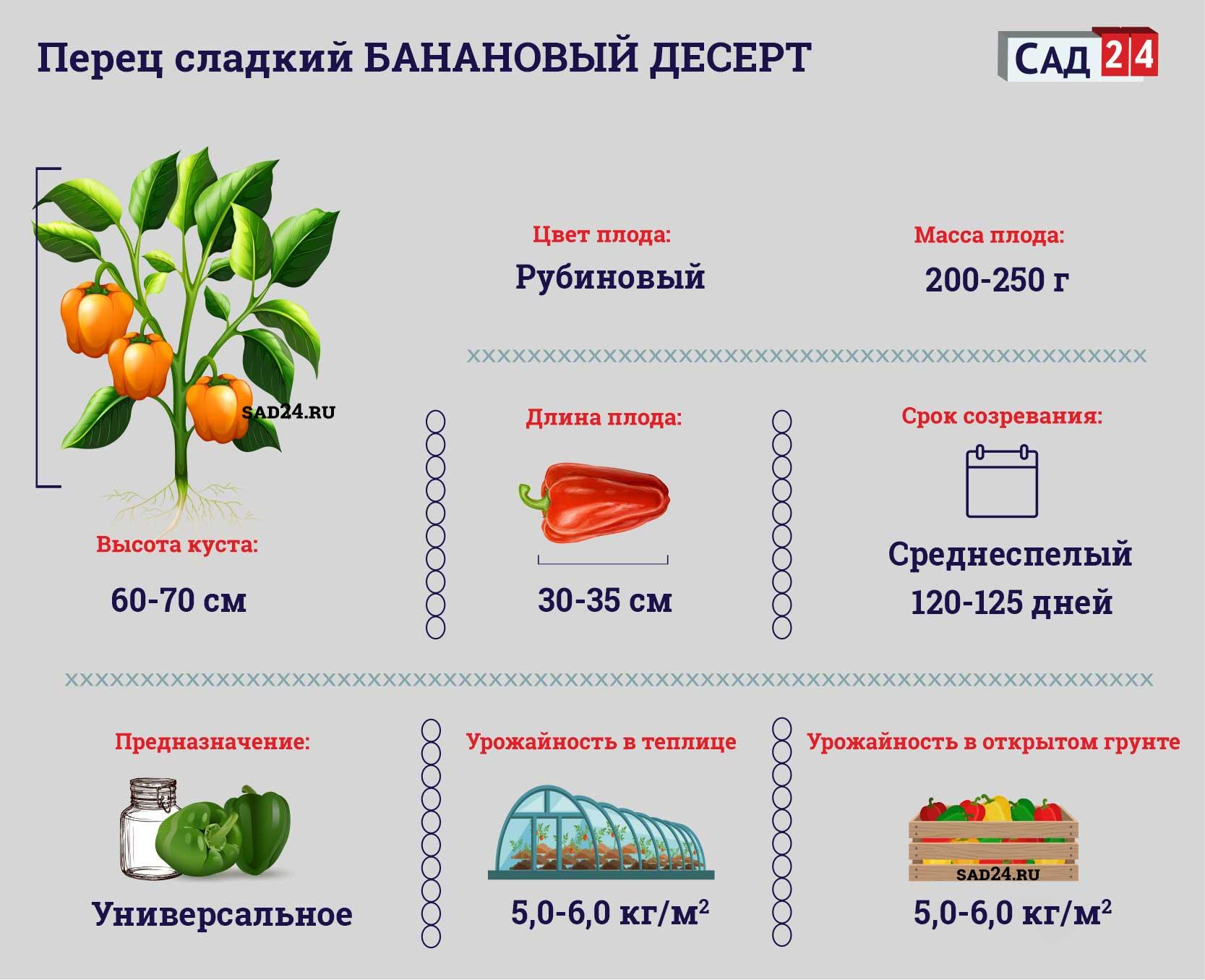 Банановый десерт - https://sad24.ru