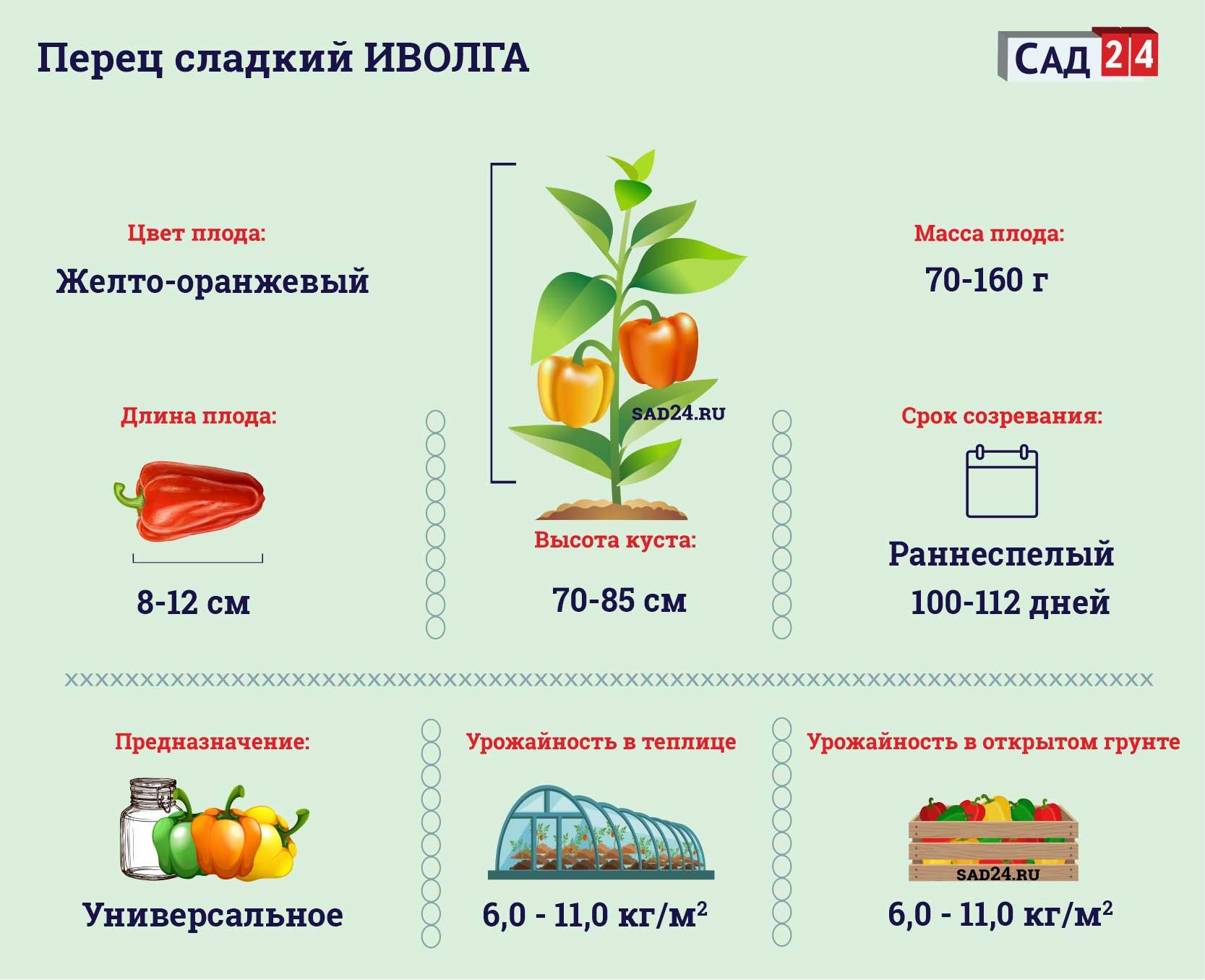 Иволга - https://sad24.ru