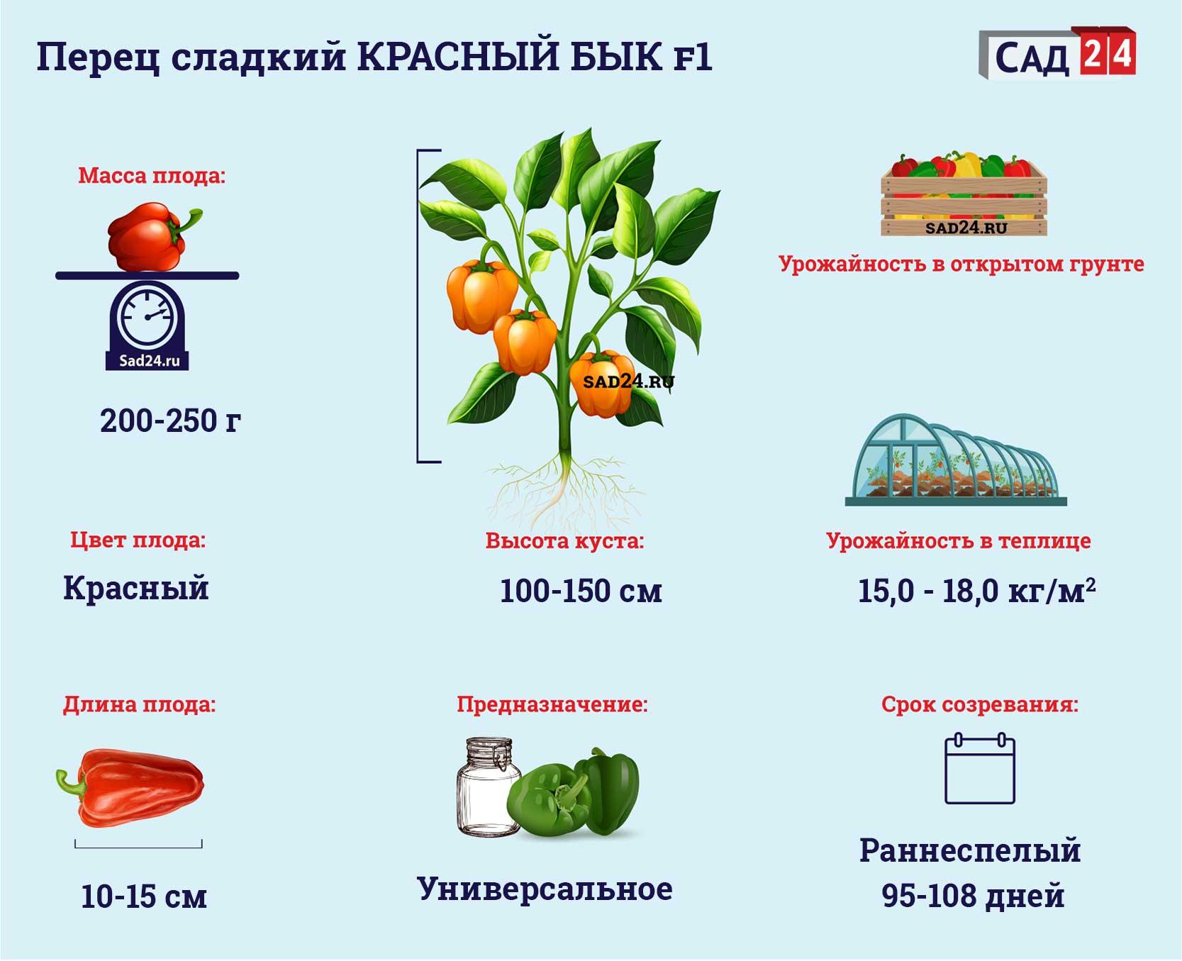 Красный бык F1 - https://sad24.ru