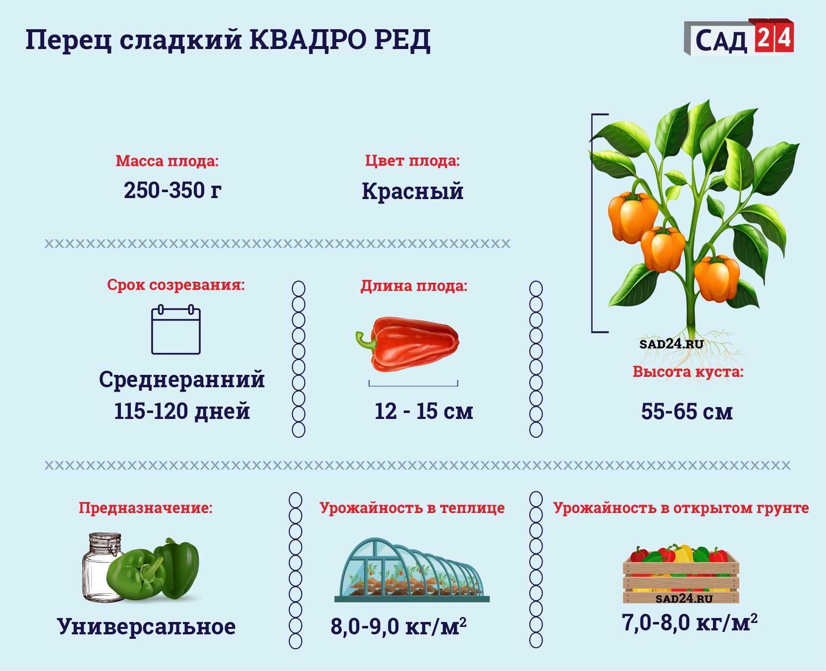 Квадро ред - https://sad24.ru