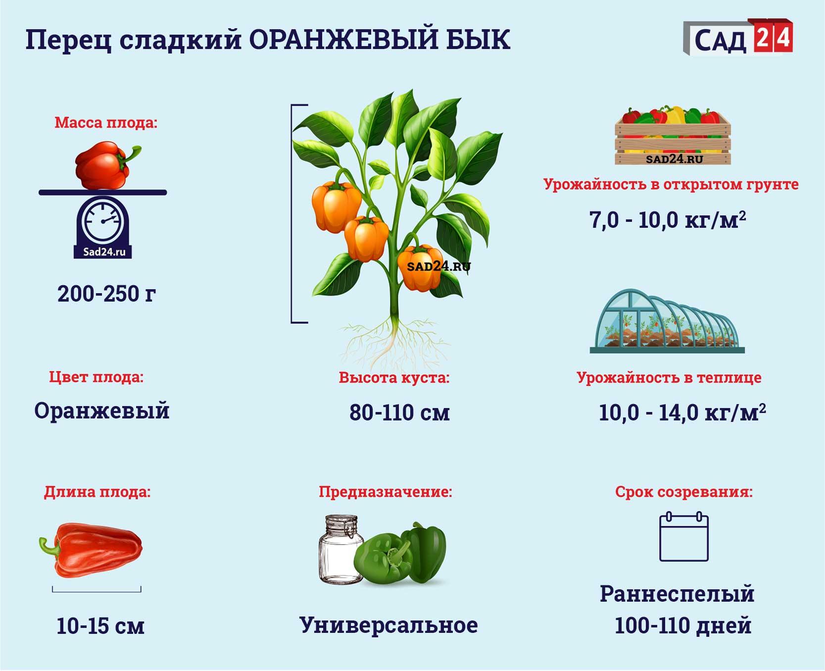 Оранжевый бык - https://sad24.ru