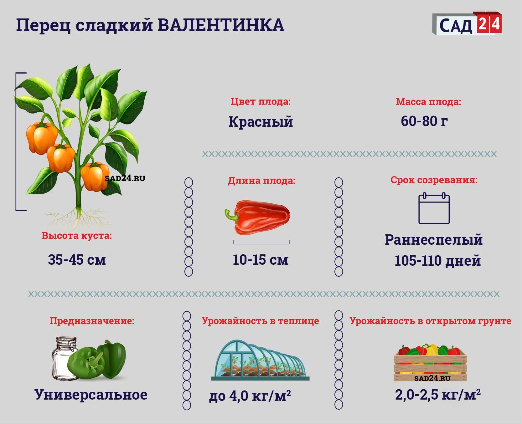 Валентинка  - https://sad24.ru