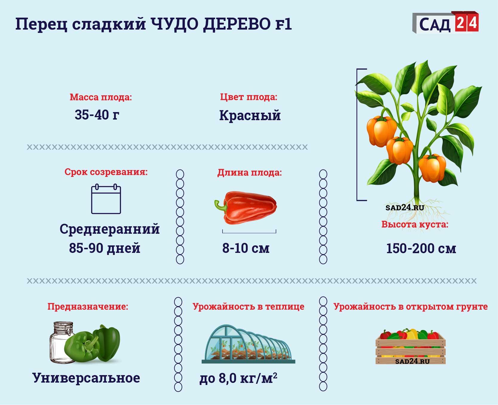 Перец Чудо дерево https://sad24.ru/