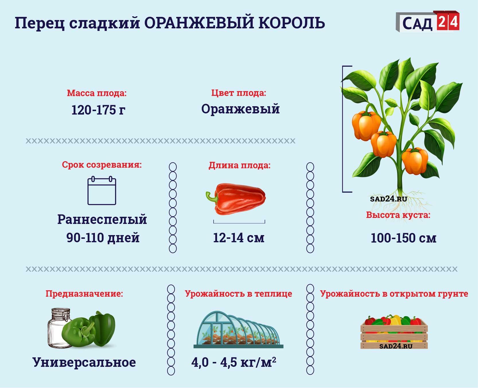 Оранжевый король https://sad24.ru