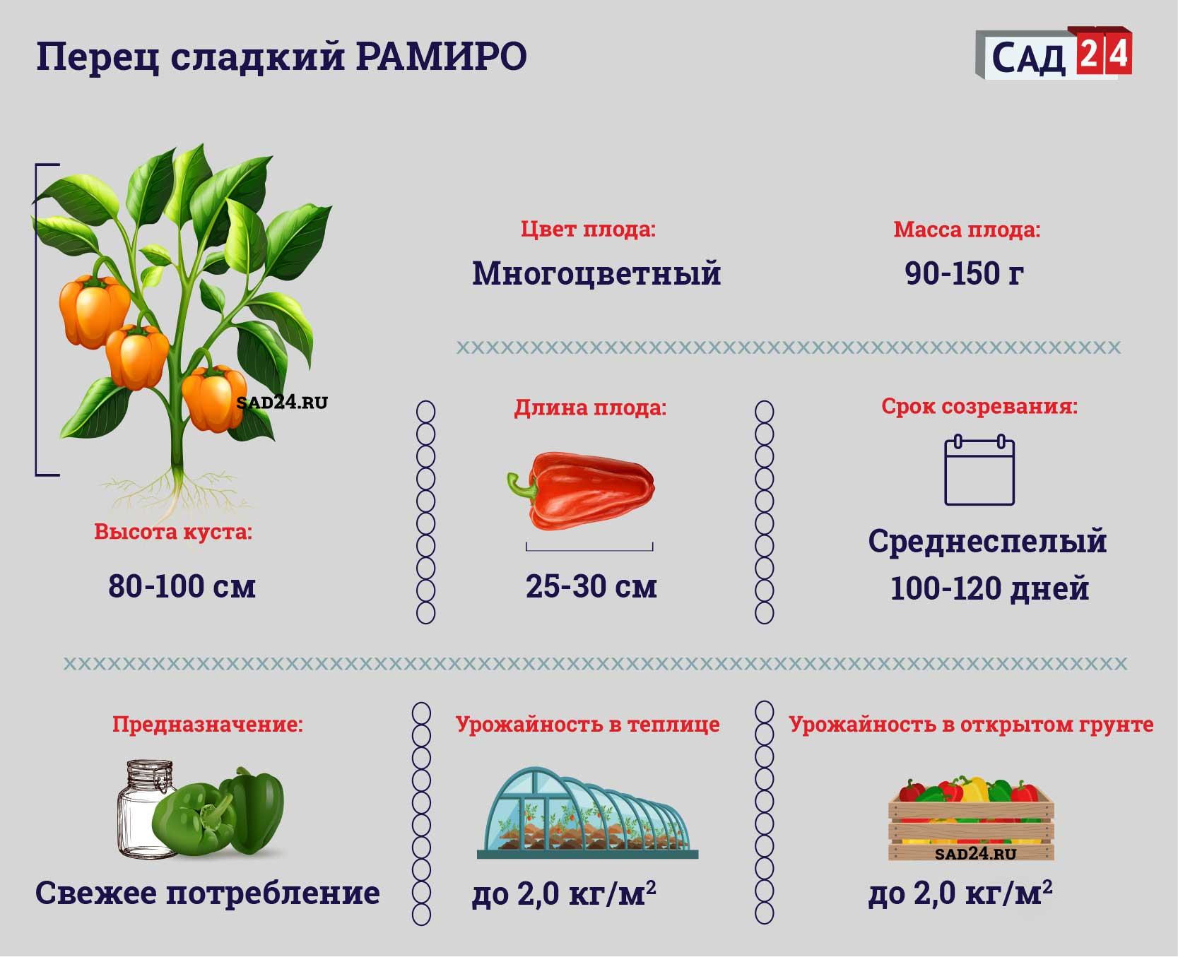 Рамиро https://sad24.ru/