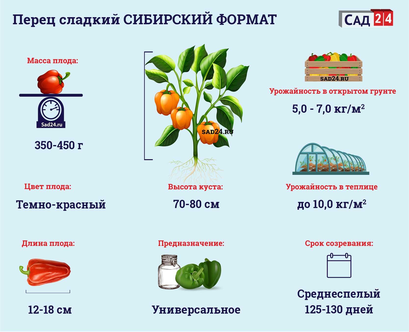 Сибирский формат https://sad24.ru/