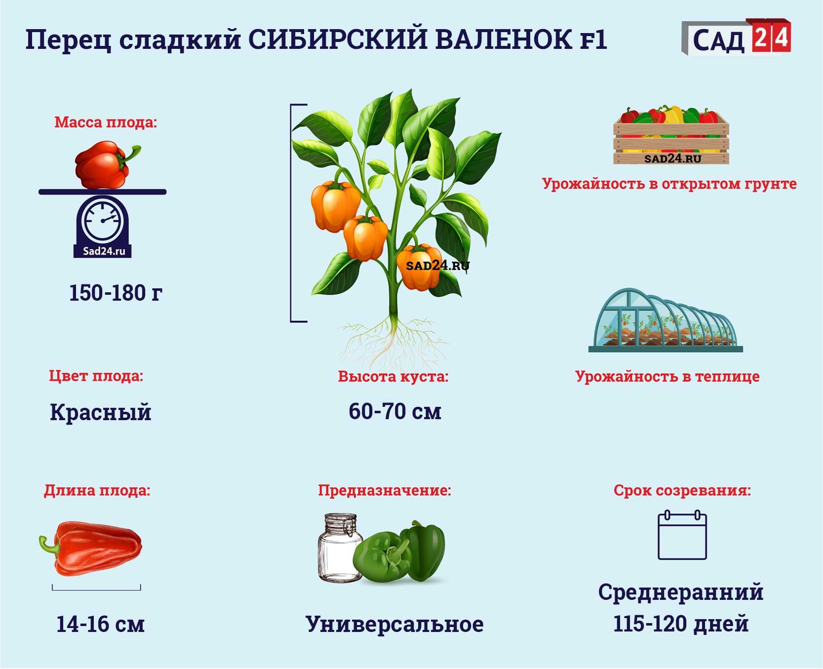 Сибирский валенок F1 https://sad24.ru