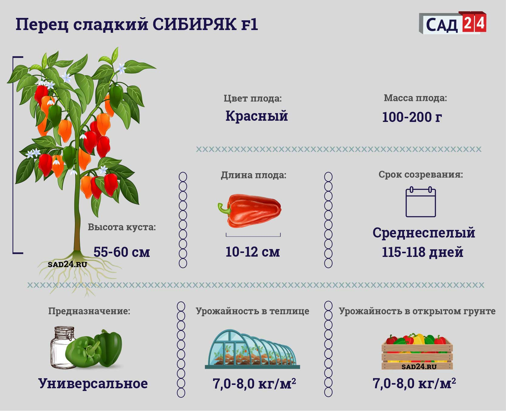 Сибиряк F1 https://sad24.ru