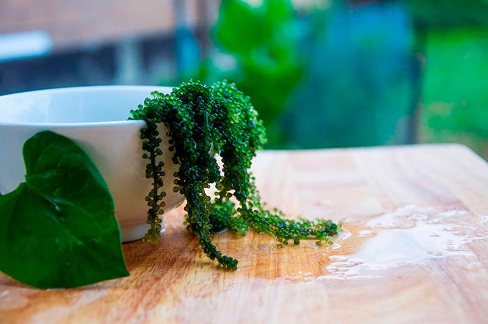 что приготовить из водорослей