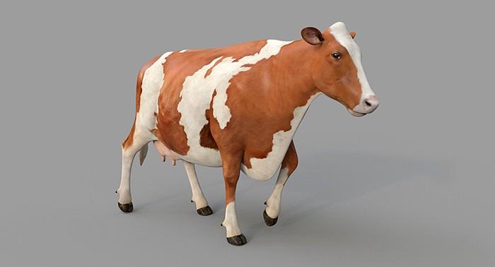 корова айширская