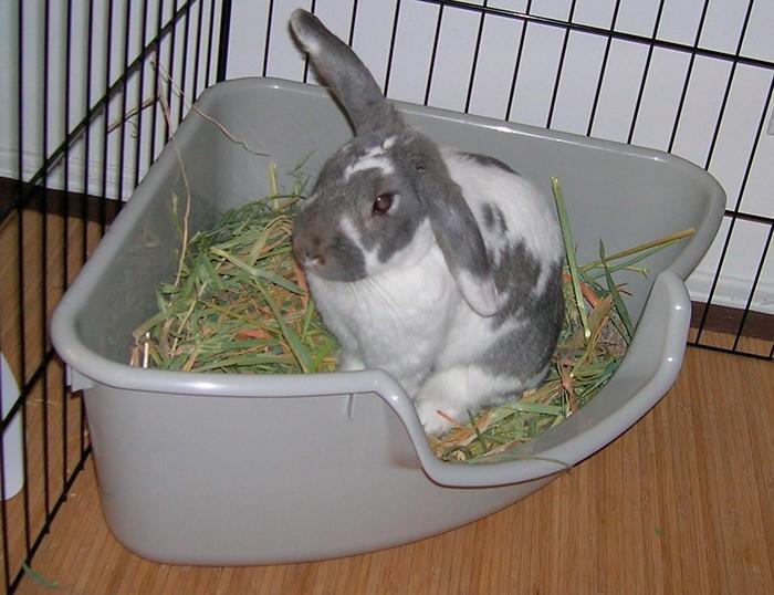 кролик в пластиковом лотке