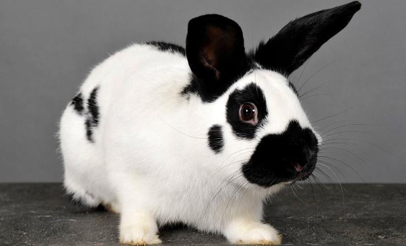 содержание кроликов