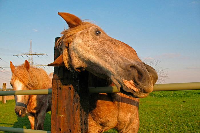 симптомы бешенства у лошадей