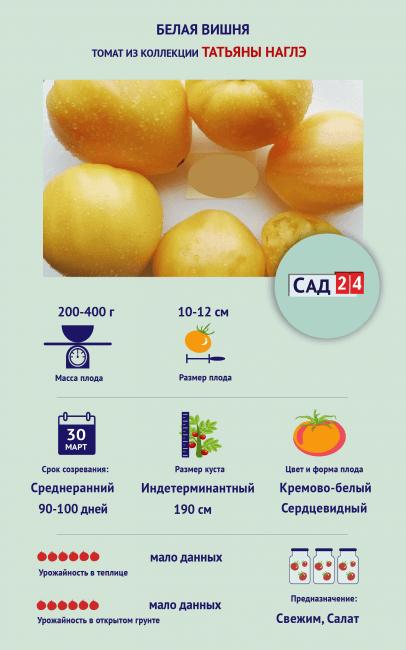 "Инфографика Томат ""Белая вишня"""