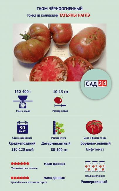 """Инфографика Томат """"Гном Чёрноогненный"""""""