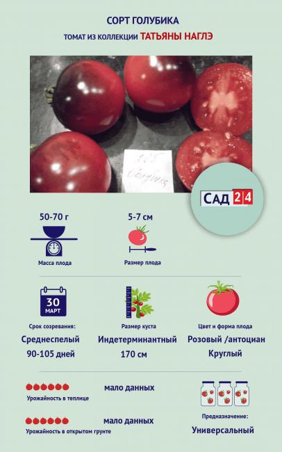 "Инфографика Томат ""Голубика"""
