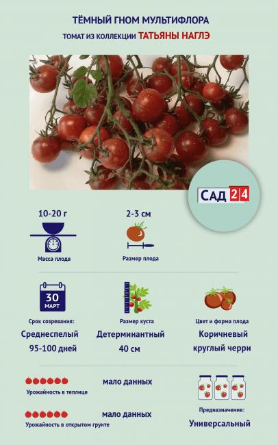 """Инфографика Томат """"Тёмный гном мультифлора"""""""