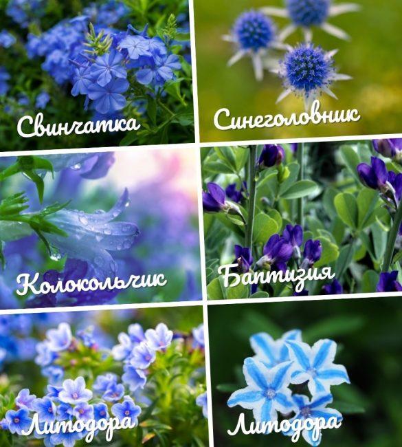25 многолетних цветов для любого сада