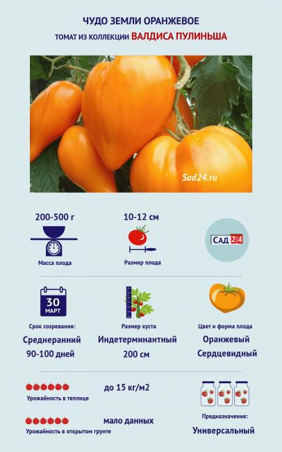 Томат Чудо земли оранжевое