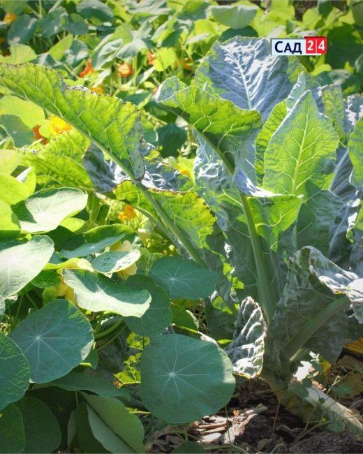companion plants!