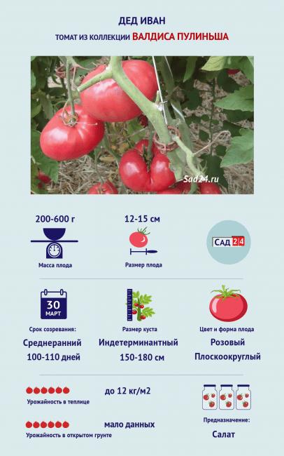 Томат Дед Иван