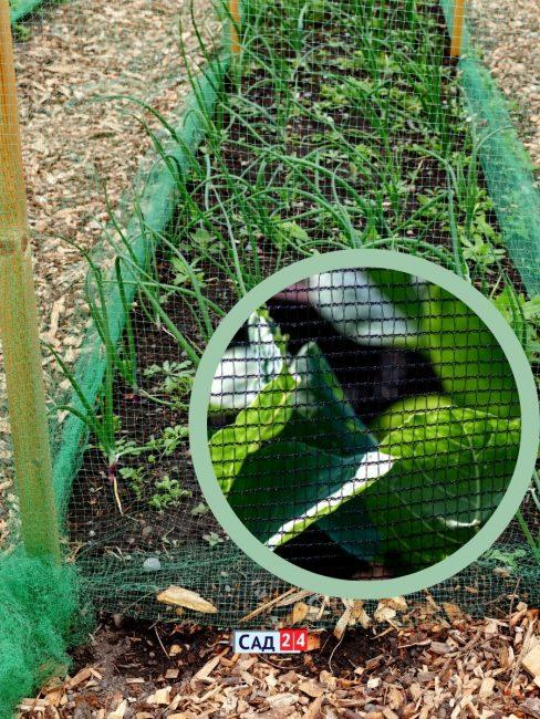 Защитная сетка на огороде