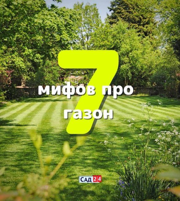 7 мифов об уходе за газоном