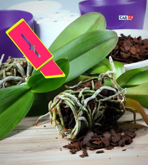 совет по пересадке растений
