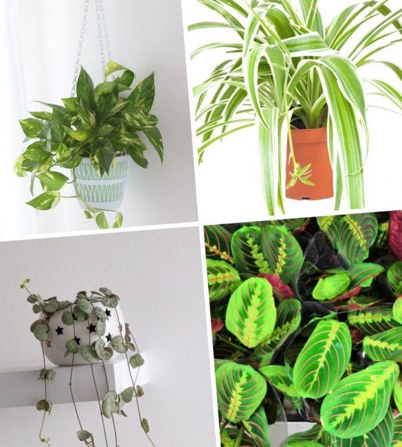 Растения для окна северной стороны