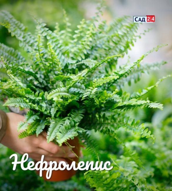 11 тенелюбивых растений для горшков