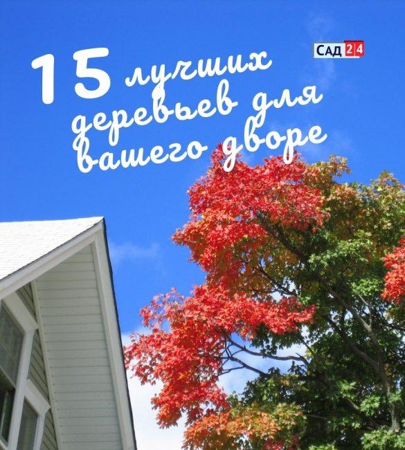 15 лучших деревьев для любого двора и сада