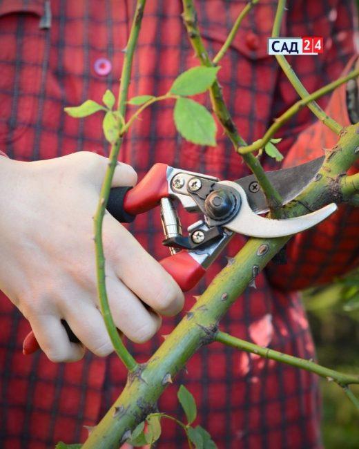 Ножницы секаторы для обрезки роз
