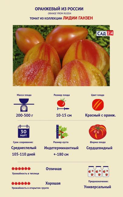 Томат Оранжевый из России Лидии Ганзен