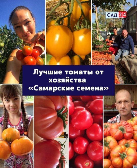 Топ-10 помидоров от фермерского хозяйства «Самарские семена»