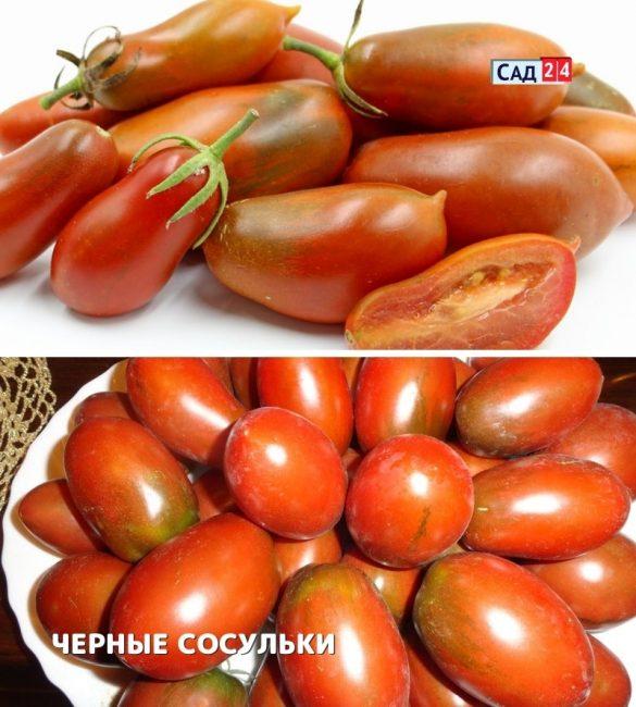 ТОМАТ Л.ГАНЗЕН СОСУЛЬКА ЧЁРНАЯ